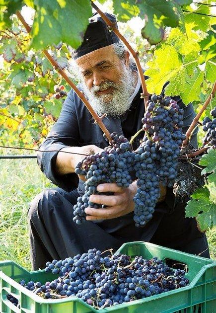монах и виноградник