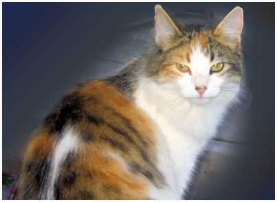 Оптина Пустынь – кот